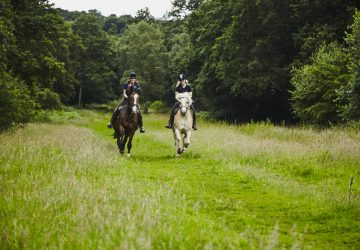 3 Reasons to Take up Horse Riding Today